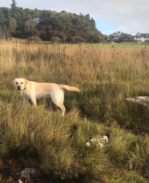 Dog friendly rooms at Loch Melfort 510x625