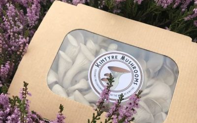 Meet Our Suppliers: Kintyre Mushrooms