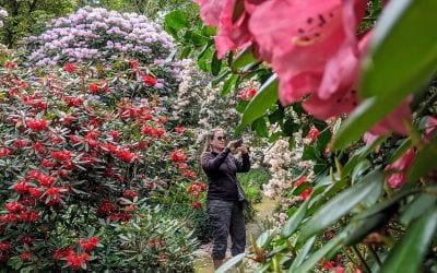 5 Beautiful garden walks on the West coast of Scotland