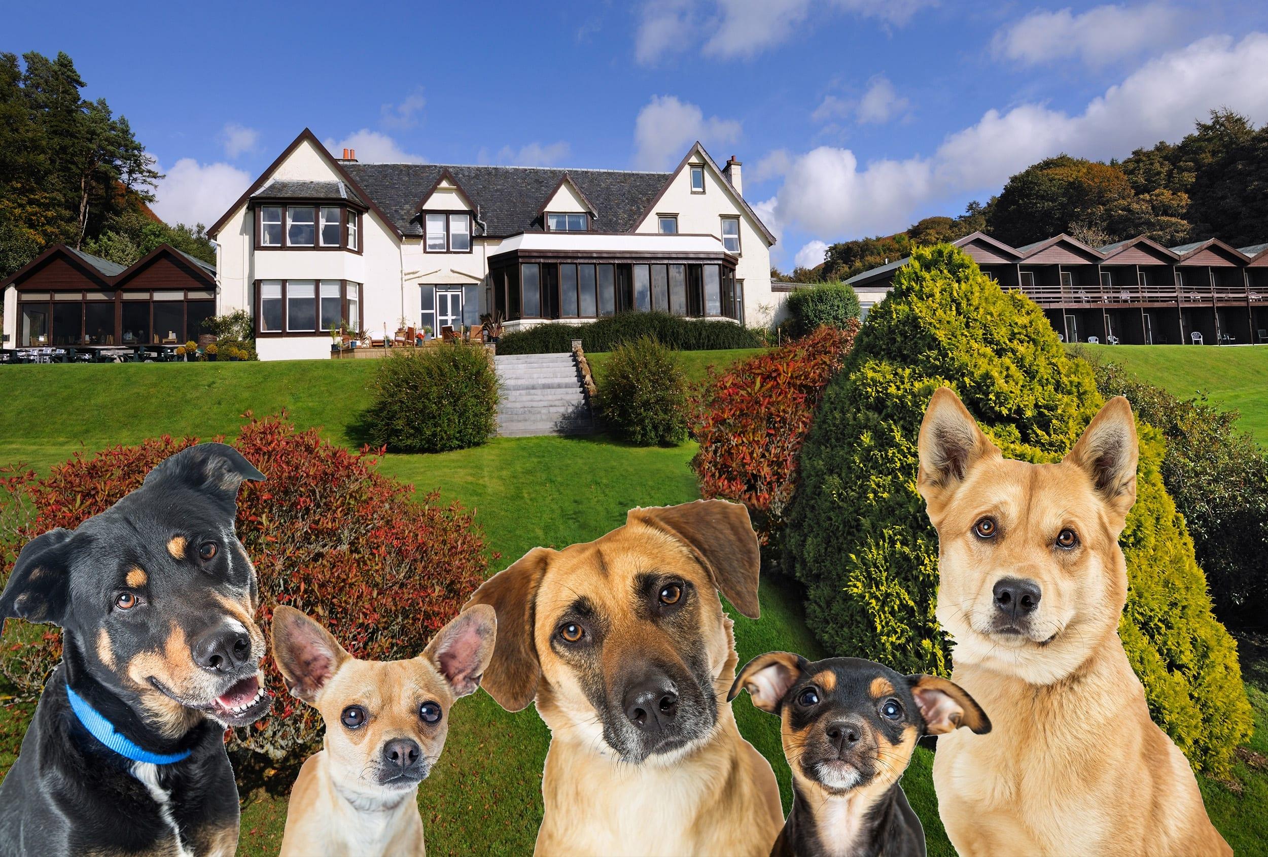 Dog Friendly March at Loch Melfort