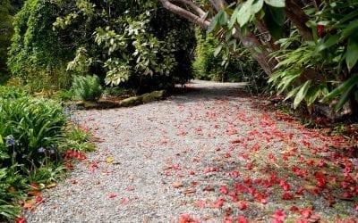 Arduaine Gardens Update