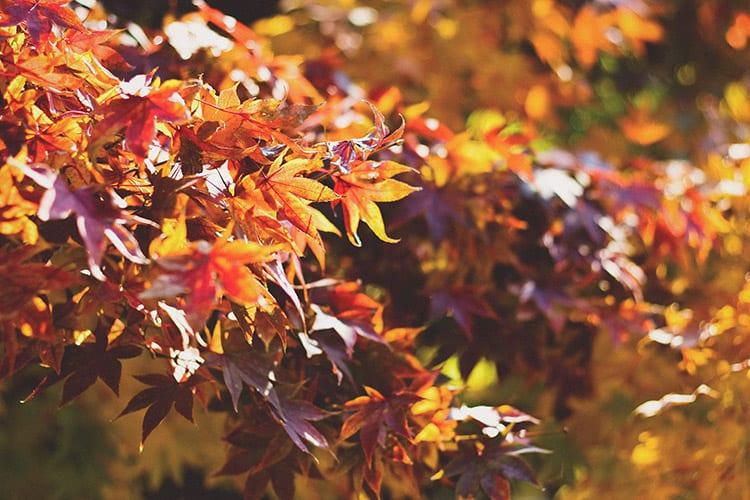 loch melfort hotel oban autumn tastes menu