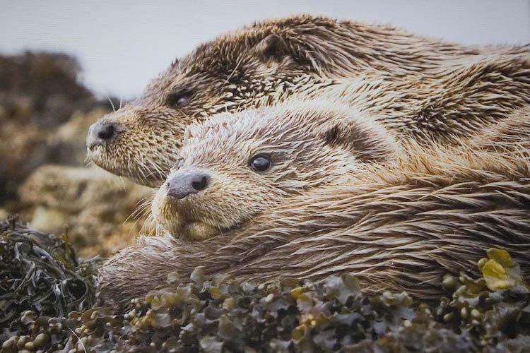 loch melfort hotel oban british otter
