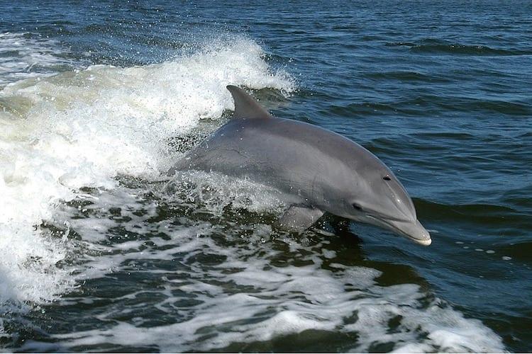 loch-melfort-hotel-oban-dolphin