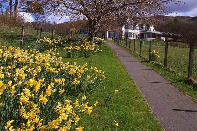 loch melfort hotel oban exterior spring daffodils
