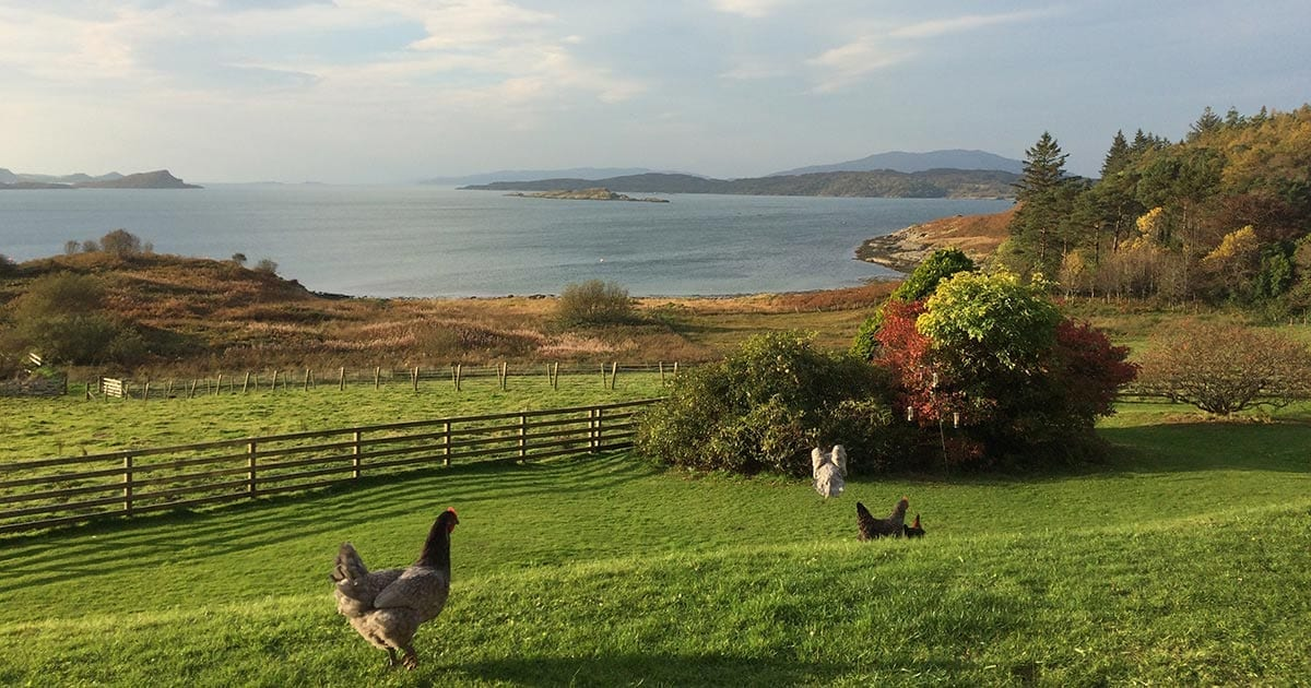 loch melfort hotel oban outdoors chickens view