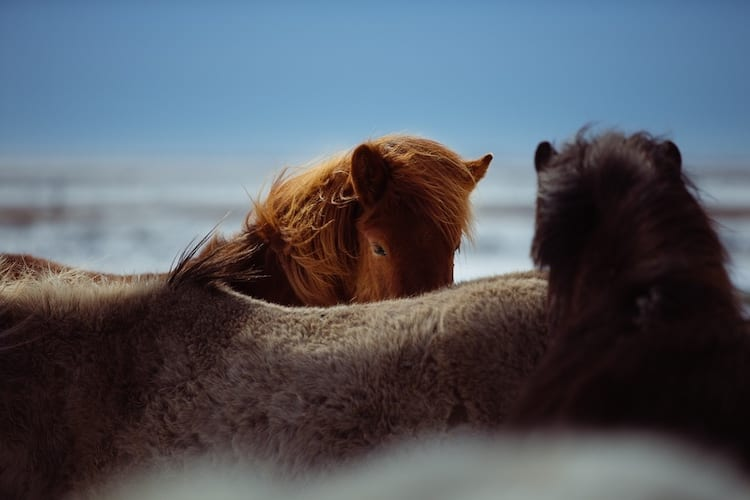 loch melfort hotel oban ponies