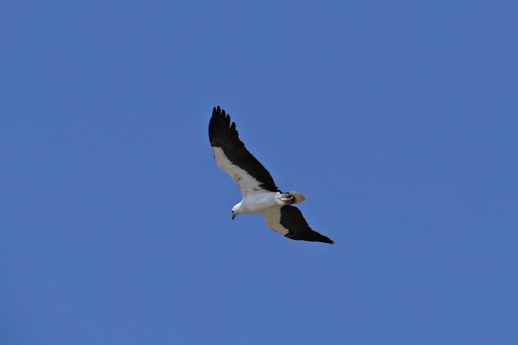 loch melfort hotel oban sea eagle