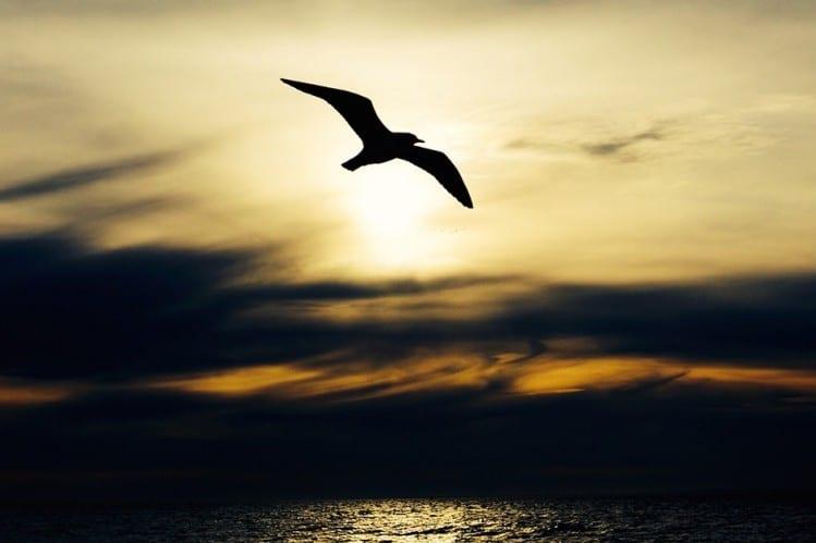 loch melfort hotel oban seabird