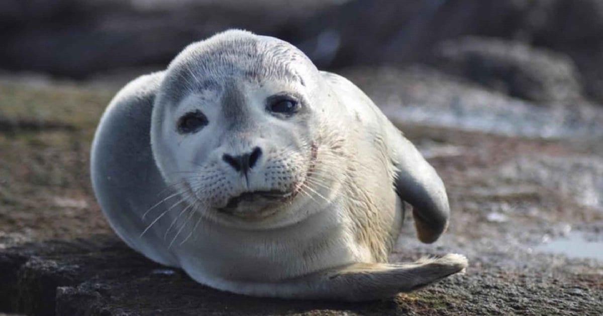loch melfort hotel oban seal resting