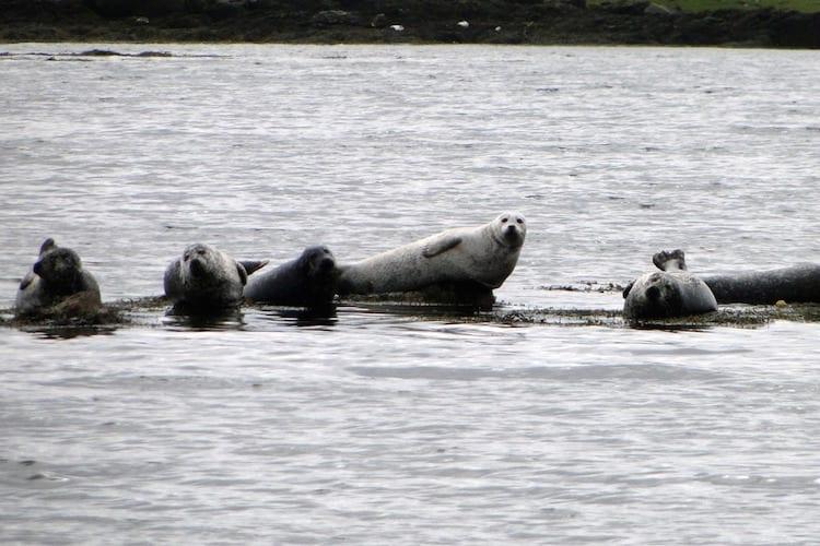 loch melfort hotel oban seals