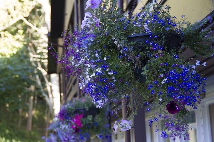 loch melfort hotel oban summer special flowers 2