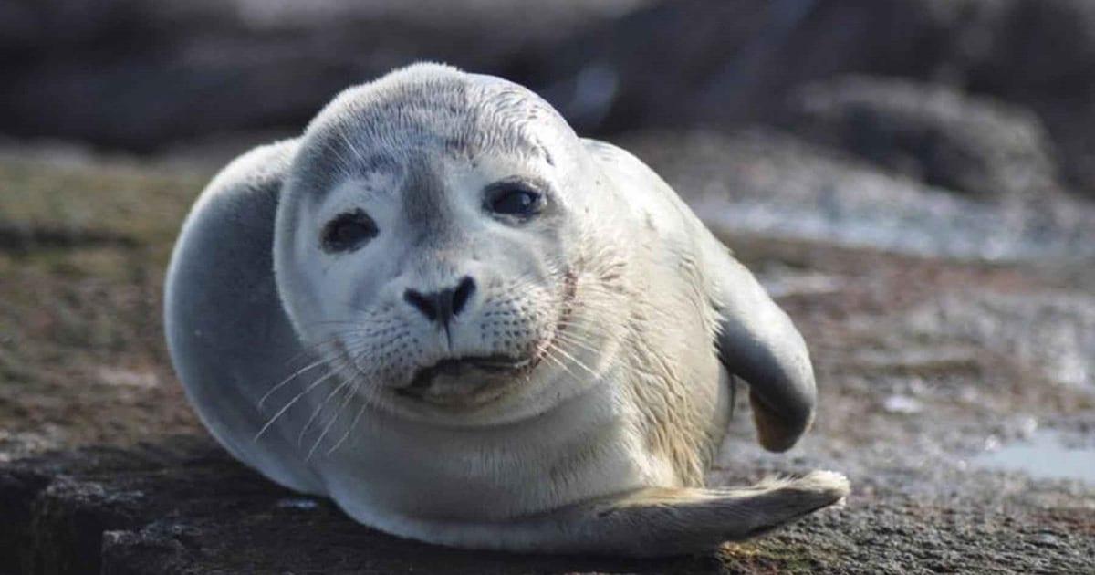 loch melfort hotel oban seal