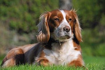 Hector-Dog