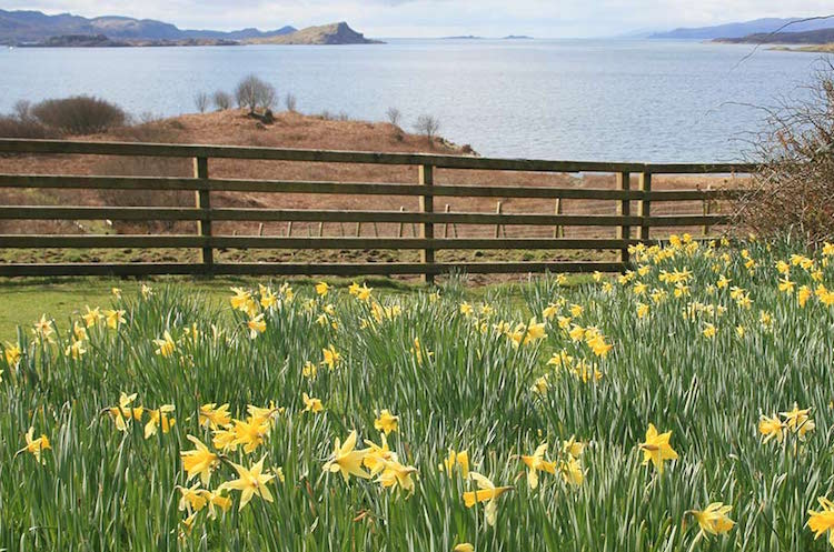 loch melfort oban hotel sea view daffodils yellow