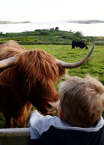 Loch Melfort Oban Hotel, What to do, Animals