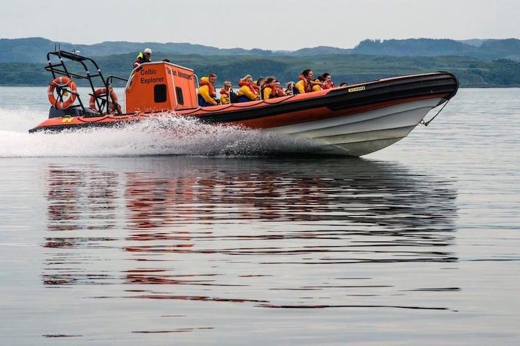 loch melfort wildlife boat trip adventure